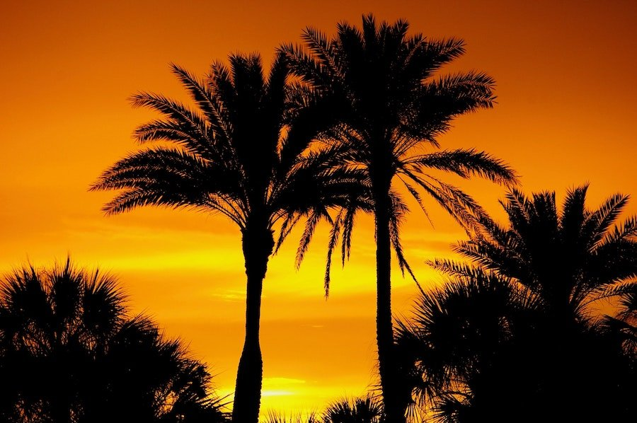 palm trees sunset silhouette
